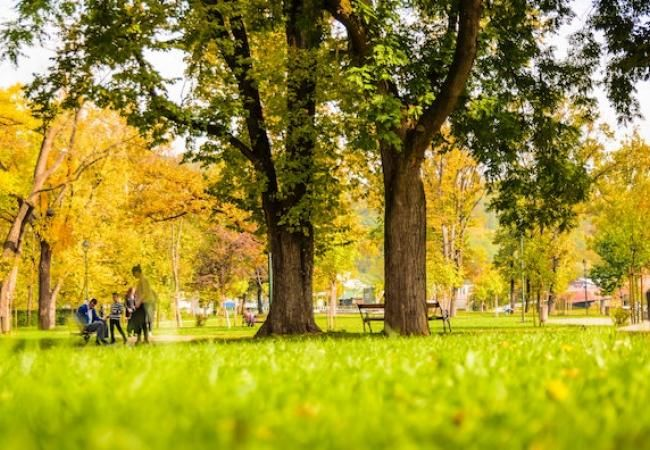 Zones verdes a les grans ciutats